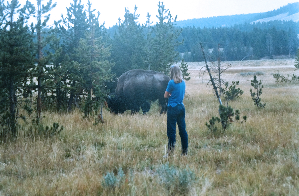 Teenage girl standing close to buffalo roaming in Yellowstone National Park.